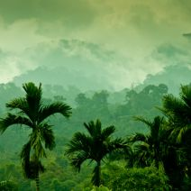 b2ap3_thumbnail_big_data_rainforest_400.jpg